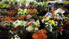Flowers at the Flower market
