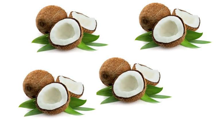 Coconut_ANA