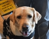 Guide dogs not easily accessible in SA