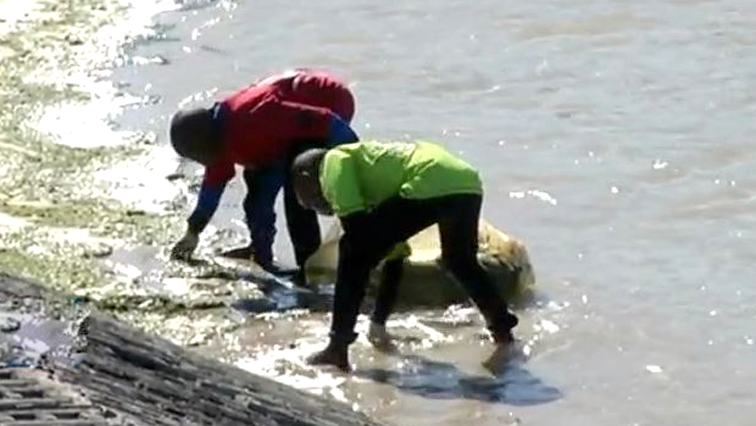 People cleaning at a beach.