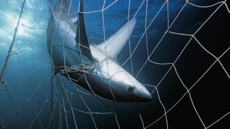 Shark-nets-R