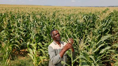 A farmer with maize crop