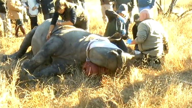 Rangers with a rhino