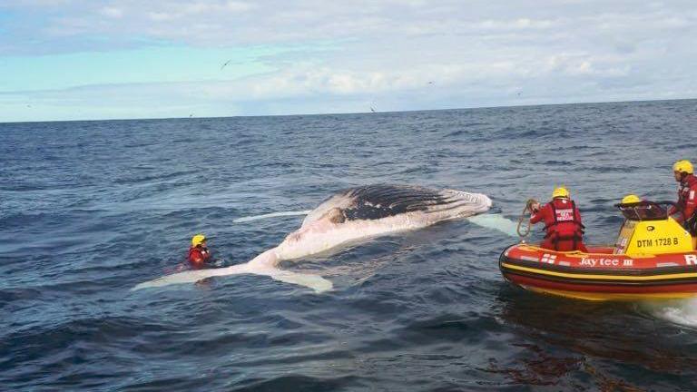 the whale carcass