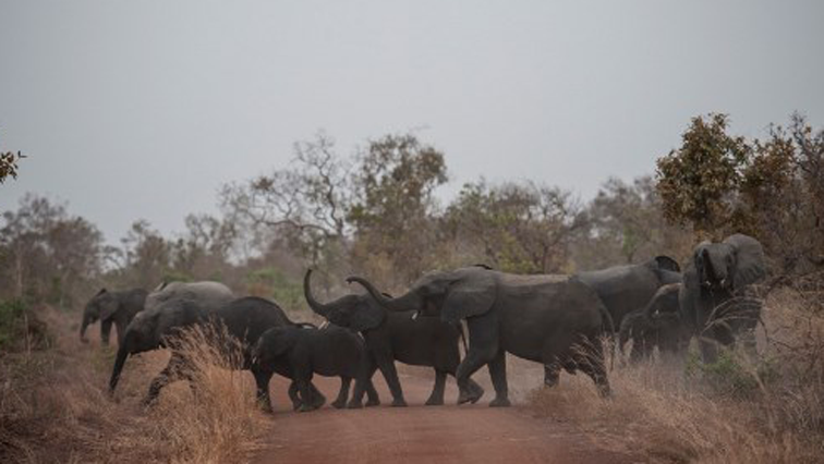 Wild animals crossing a road in a park