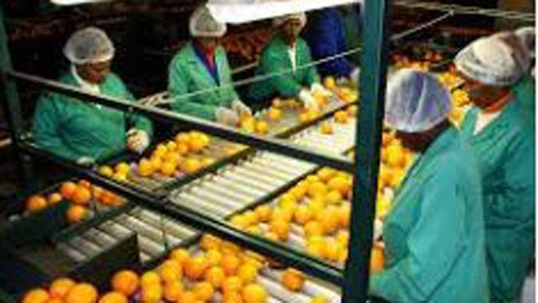 Fruit framers on production