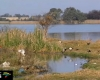 Major municipalities fingered in Vaal River pollution