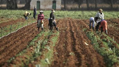 Farm workers working the land