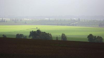 A wheat field is seen on a rainy day near Sderot
