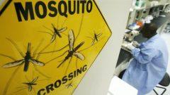 Mosquito board
