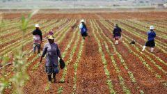 Farm workers on a farm