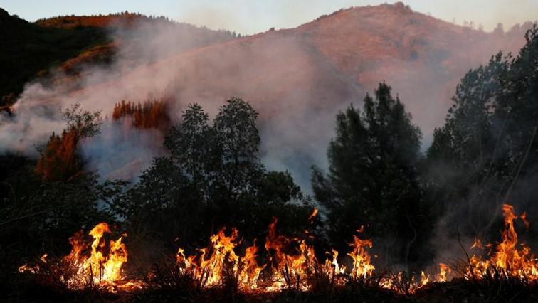 vegetation fire.