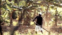 Farm worker.