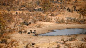 SABC News Botswana elephants R ED 300x169 - Botswana considers allowing big game hunting, culling elephants