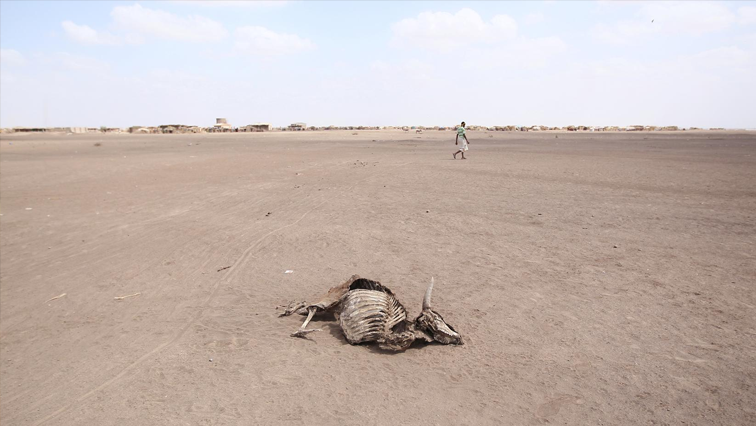 SABC News Drought in Ethiopia R - Drought forces Namibia to auction wild animals
