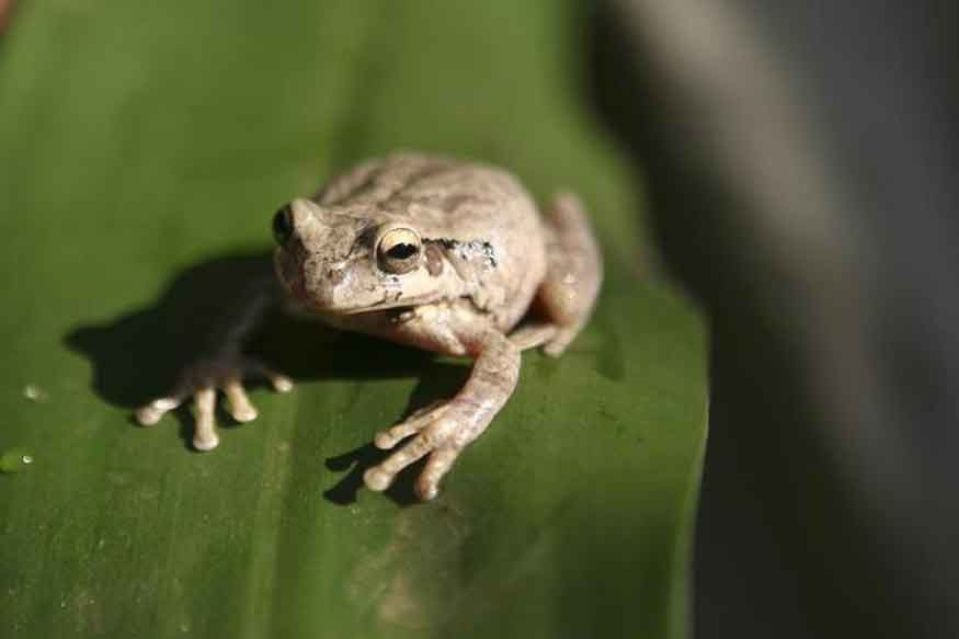 SABC News-Frog-Reuters
