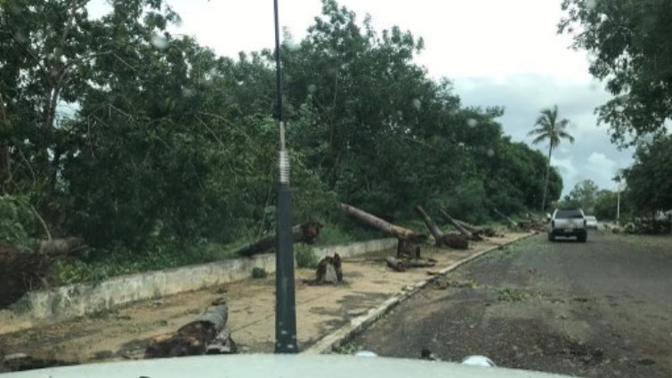 Trees affected by Cyclone Kenneth