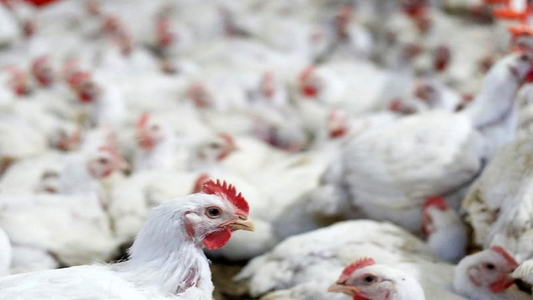 SABC News Poultry R - SANCU, EBieSA meet to discuss the poultry industry