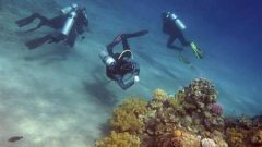 Divers look at coral reefs in the Red Sea resort of Dahab, Sinai