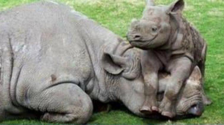 SABC News Rhino @SAPoliceService - Police seize 167 rhino horns worth millions