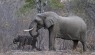 Botswana to cull elephants for hunting purposes