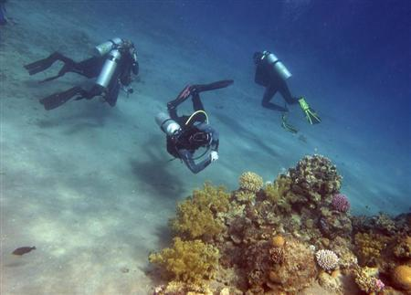 SABC News Red Sea R - 'Super corals' give glimmer of hope for world's dying reefs