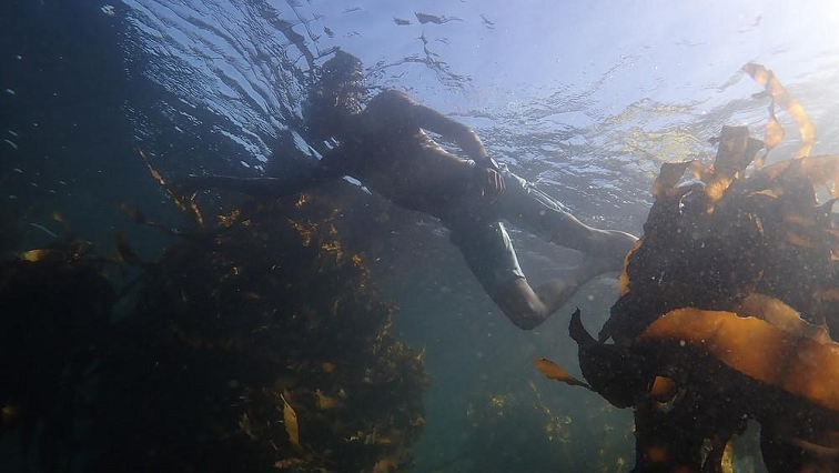 SABC News Underwater video Twitter @WWFSouthAfrica - WWF-SA launches underwater video for ocean conservation