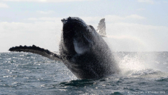 Greenpeace Africa urged Creecy's department to take action before more whales die