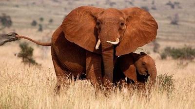 elephant poachingR - Security guard killed by elephant at Foskor Mine's premises