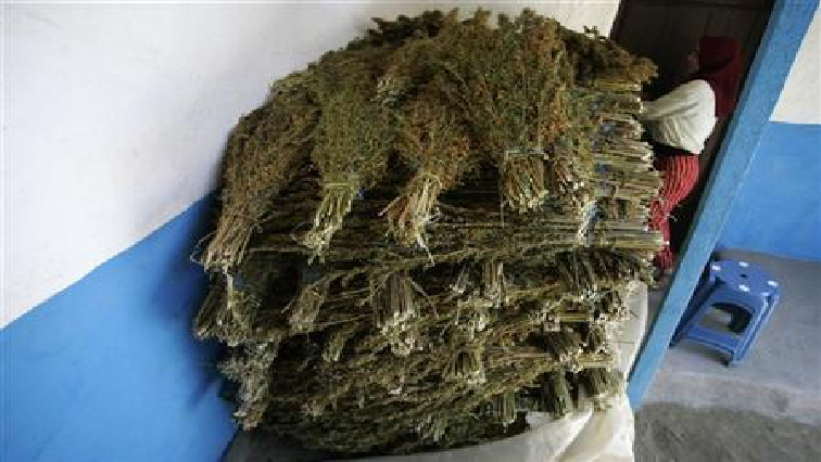 SABC News  Cannabis Reuters - Morocco police seize record amount of cannabis resin