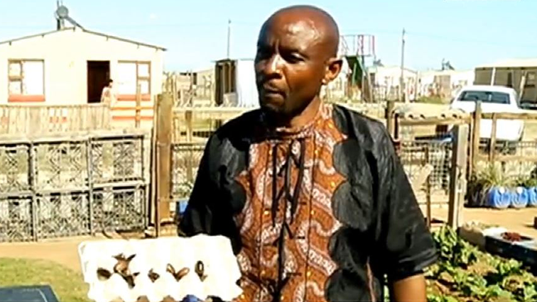 SABC News Cockroach Farmer - Robert Matsabisa farms cockroaches, worms
