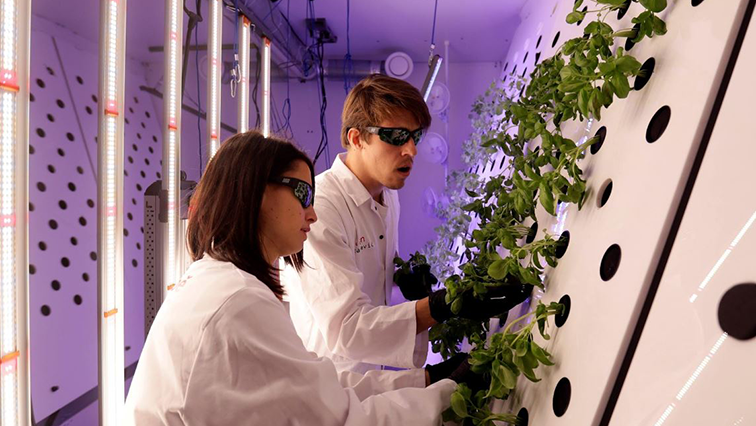 SABC News Scientists R - Czech lab grows mustard plants for Mars