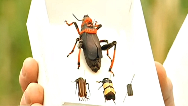 Residents alerted authorities after noticing huge amounts of these insects inside their homes