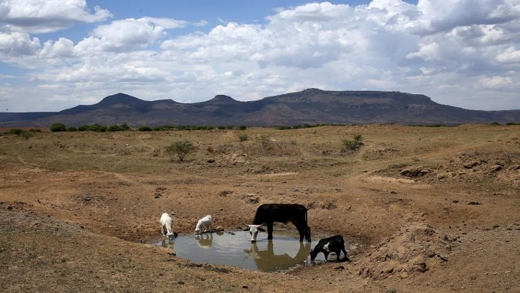 SABC News Drought Reuters - Farmers in Central Karoo region continue to face severe drought season