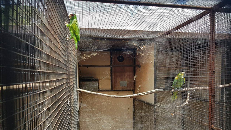 Parrots found at Farmall Parrots, where hundreds of parrots were found dead.