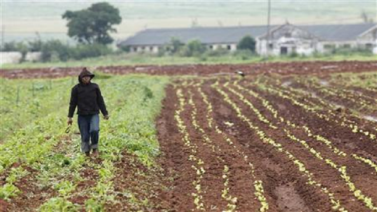 SABC News Agriculture R - North West food producers lament terrible road infrastructure