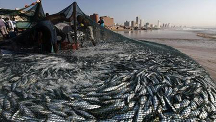 SABC NEWS Sardines R 1 - Members of public banned from participating in sardine run