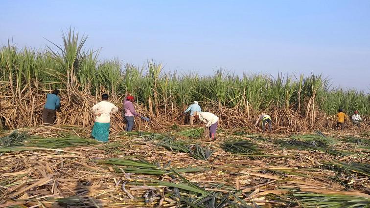 SABC News Sugar Cane R - Mpumalanga farm beneficiaries demand access to their land