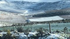 WhatsApp Image 2020 08 18 at 10.46.59 240x135 - Snow falls in the Eastern and Western Cape