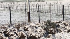 WhatsApp Image 2020 08 18 at 10.47.00 2 240x135 - Snow falls in the Eastern and Western Cape