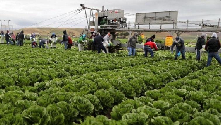 farmers 3 - Pop-up COVID-19 testing sites help California farmers keep working