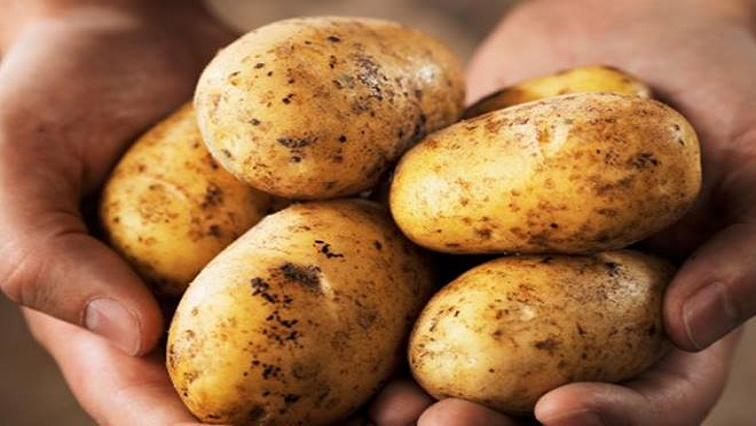 SABC News Potatoes P - Price of potatoes expected to increase due to low harvest, bitterly cold winter