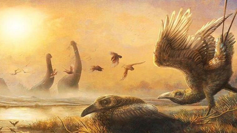 birdy num num 1 - Dinosaur-era bird with scythe-like beak sheds light on avian diversity