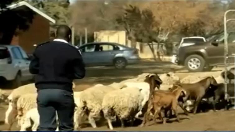 SABC News Farm - Modise's animal cruelty trial continues on Wednesday