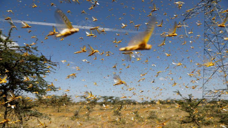 SABC News Locusts R 1 - Northern Cape Agriculture MEC warns farmers of locust outbreak