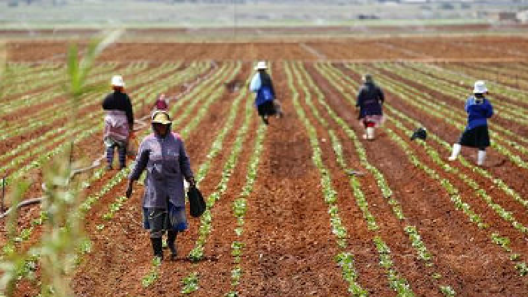 SABC News Agriculture - Agricultural department allocates R1bln to support subsistence farmers amid COVID-19 Pandemic