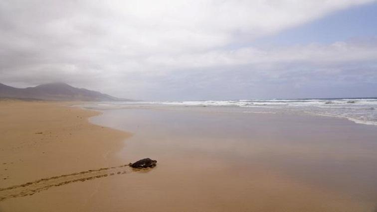 SABC News Canary Island Reuters - Canary Islands beaches deserted as COVID decimates Spanish tourism